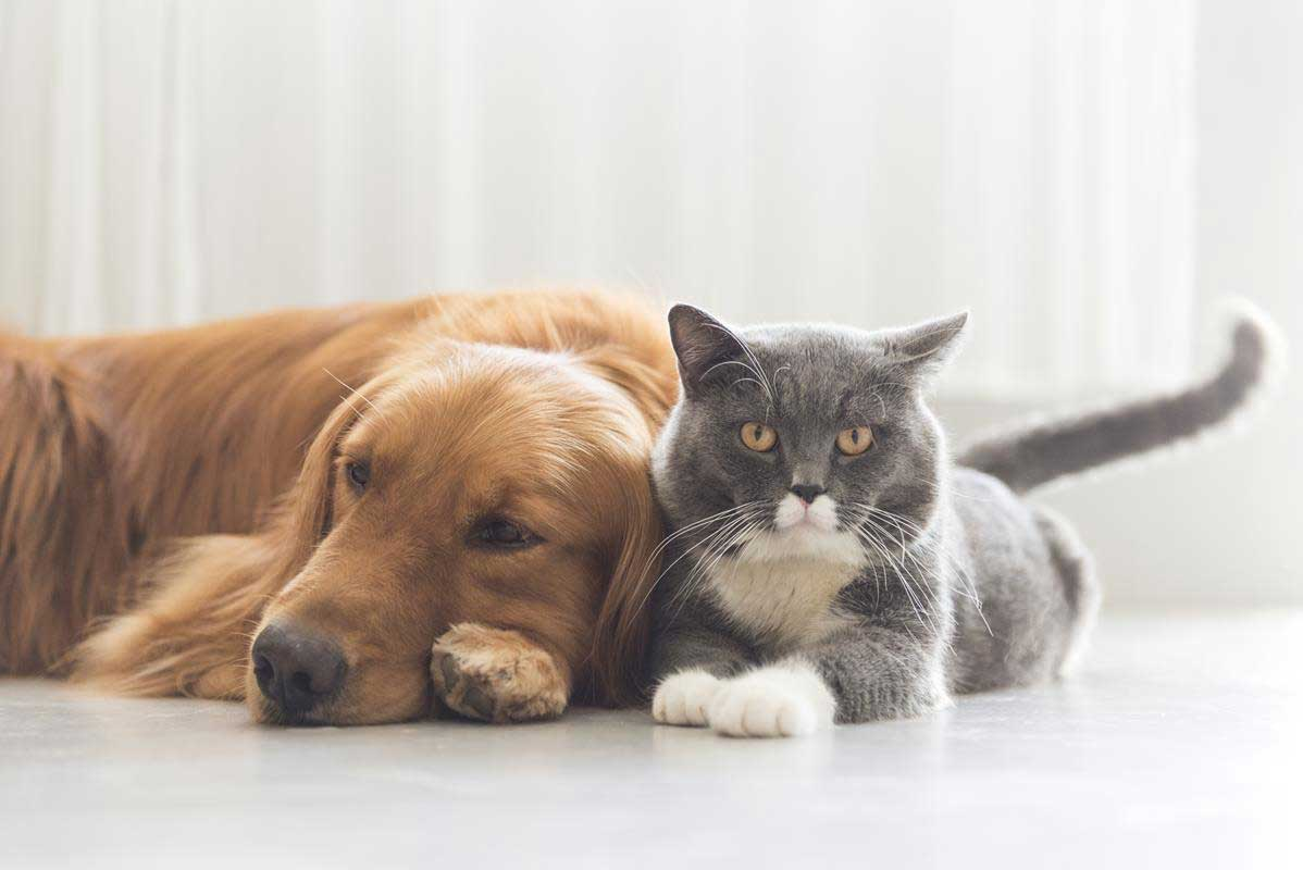 about our veterinary practice Laurens, South Carolina