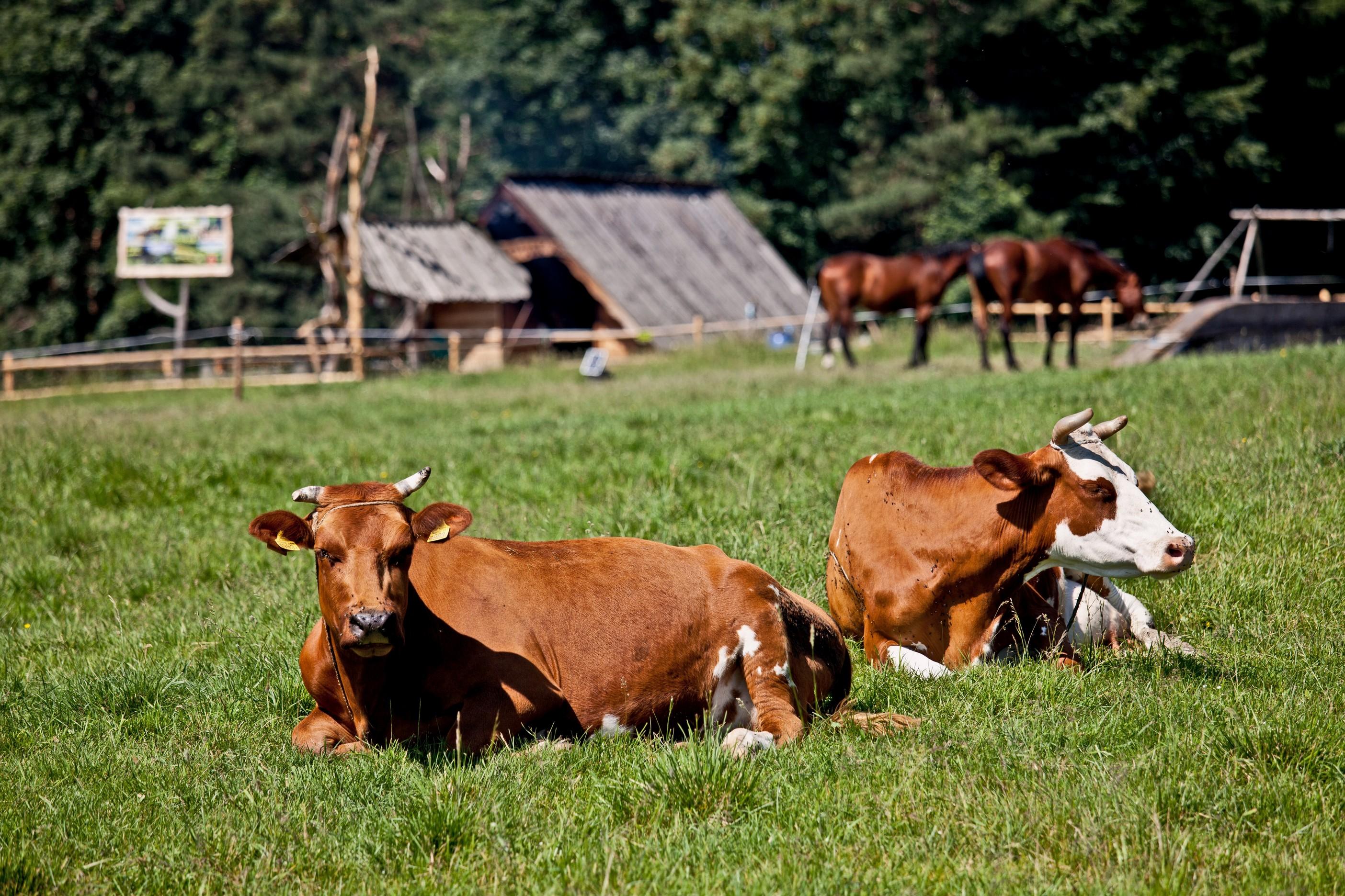 bovine services Laurens, South Carolina