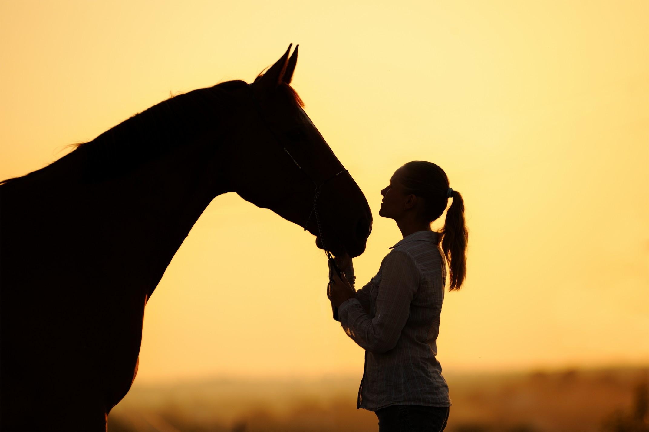 equine services Laurens, South Carolina